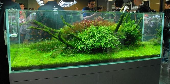 Nature Aquariums And Aquascaping Inspiration First News